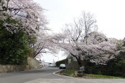 201304hijiyama-5.jpg
