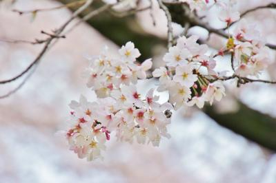 201304hijiyama-7.jpg