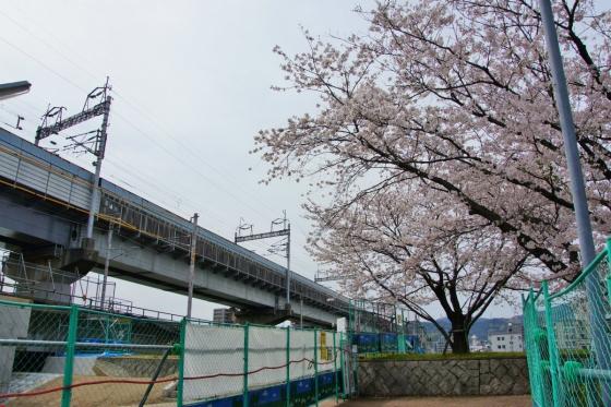 201403hakushima-5.jpg