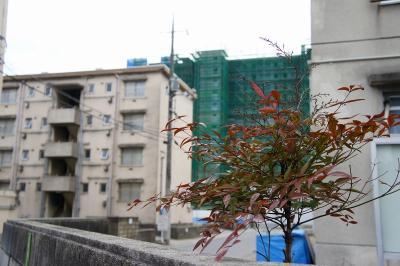 201101ushita-14.jpg